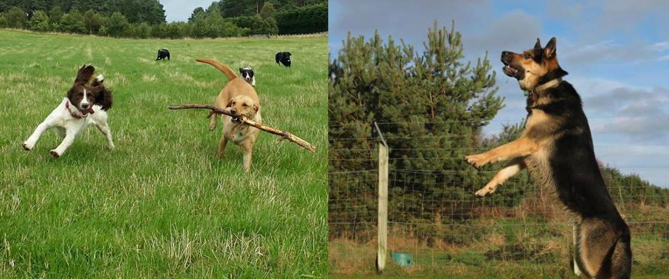 banner_Dogs1.jpg